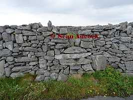 Semi squeeze Stile Inis Oirr